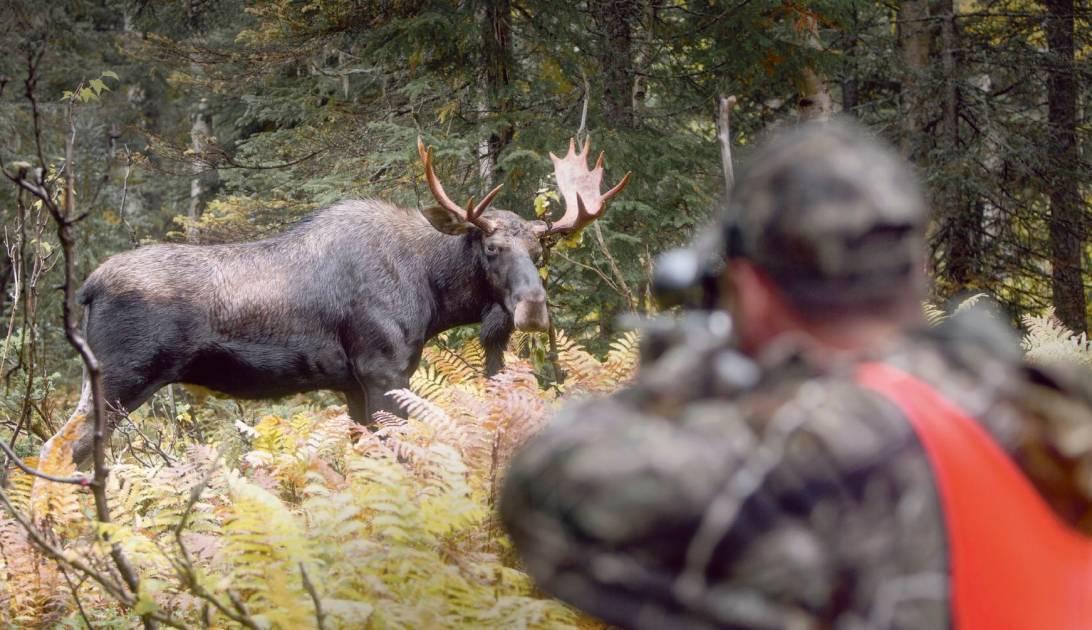 Zecs Québec et la Sépaq appuient l'encadrement des chasseurs non-résidents