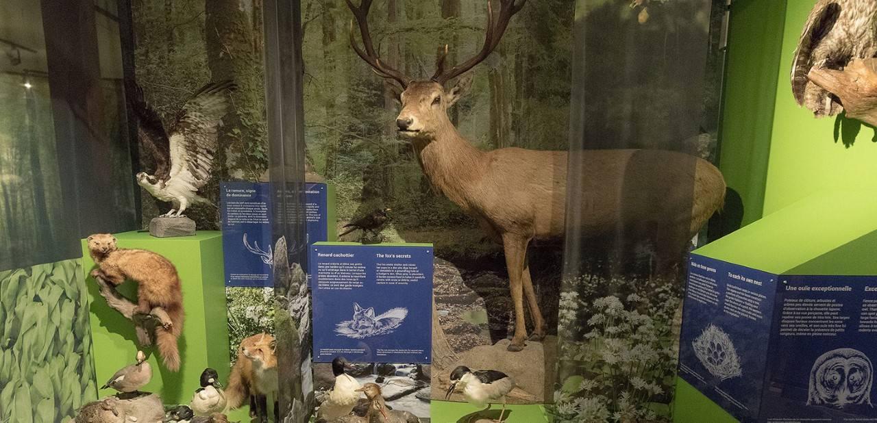 L'Animalium, le musée zoologique de Mont-Tremblant