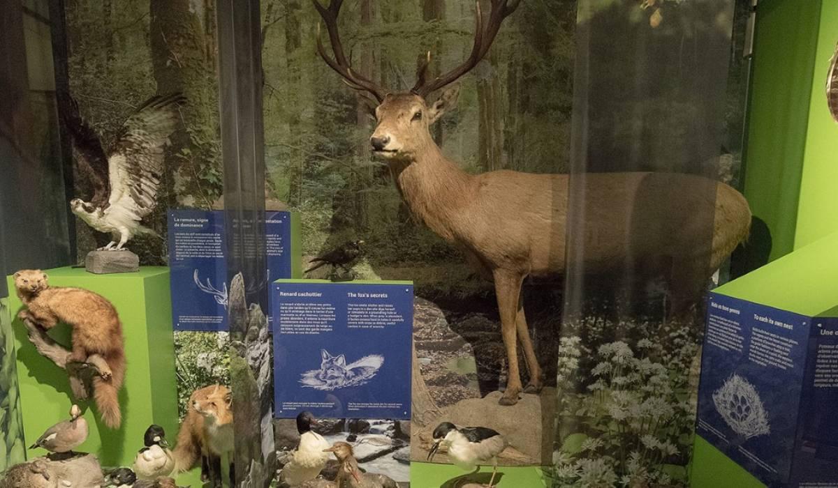 Un musée à découvrir avec ses 300 mammifères et oiseaux