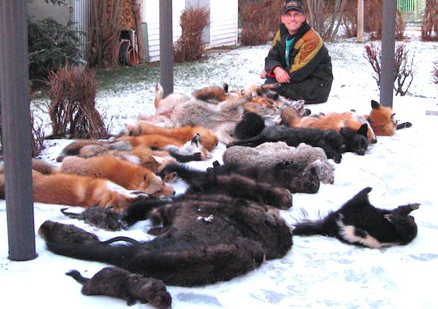 Les animaux à fourrure soumis à un premier Plan de gestion
