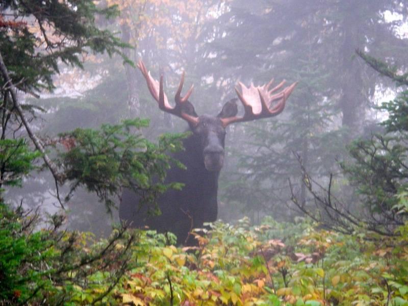 Le choix des boulets pour les chasses de l'orignal et du cerf de Virginie