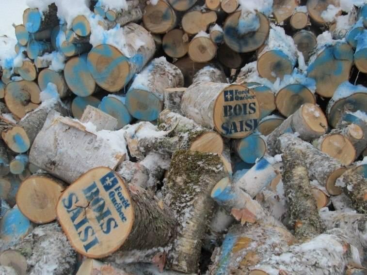 Collaboration souhaitée dans une enquête sur une coupe illégale de bois