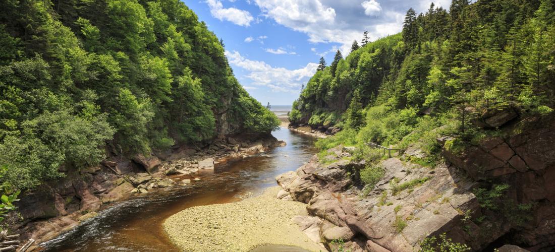 Une nouvelle aire de protection pour la forêt acadienne ancienne au N. B.