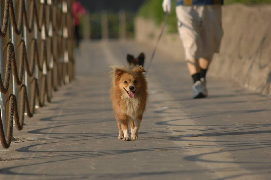 Les chiens admis dans les parcs nationaux d'Aiguebelle et du Lac-Témiscouata
