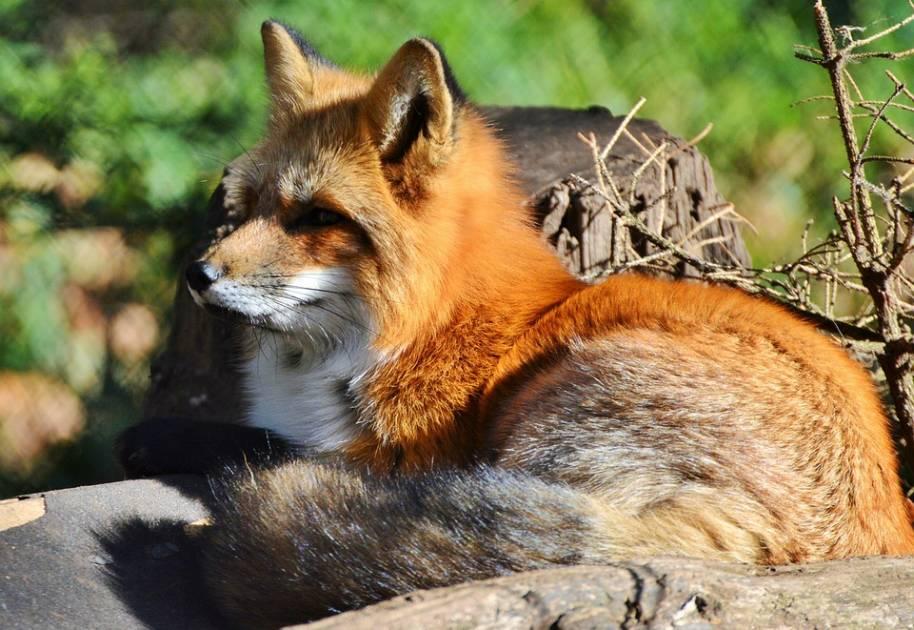 La Fondation de la faune vous invite à célébrer son 30e anniversaire