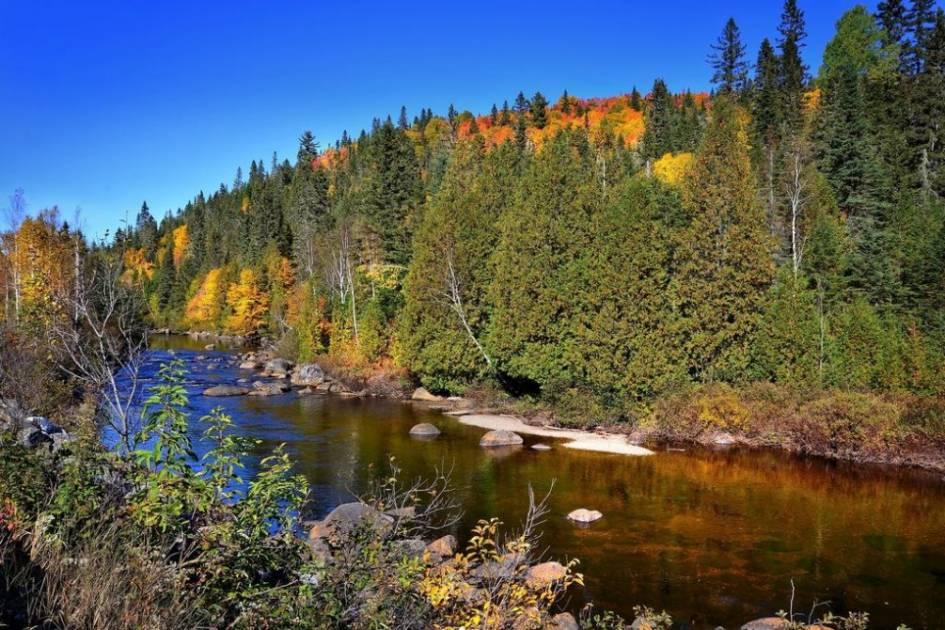 Tordeuse des bourgeons d'épinette: protéger les petites forêts privées