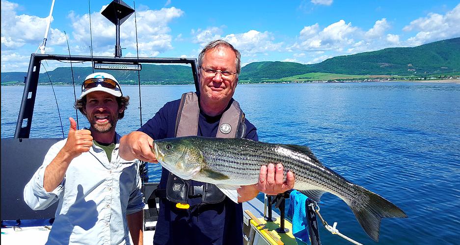 Partir à la pêche du bar rayé en mer et près de 40 ans à protéger la faune