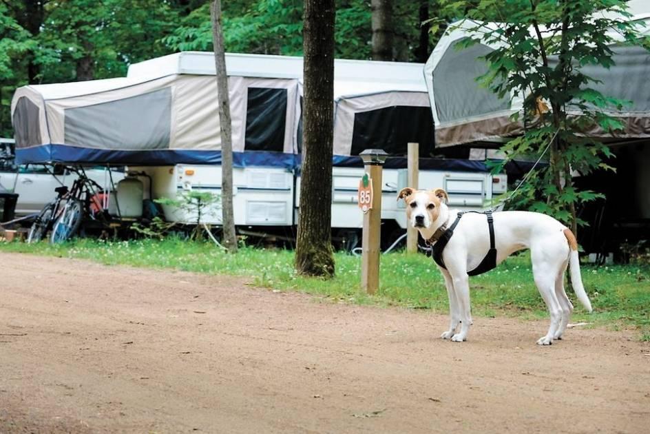 Camper avec des animaux de compagnie comportent des règles