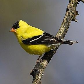 Un parasite menace les oiseaux dans les provinces de l'Atlantique