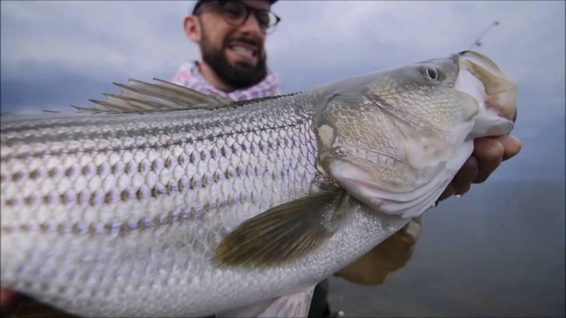 Québec rappelle les règles encadrant la pêche du bar rayé