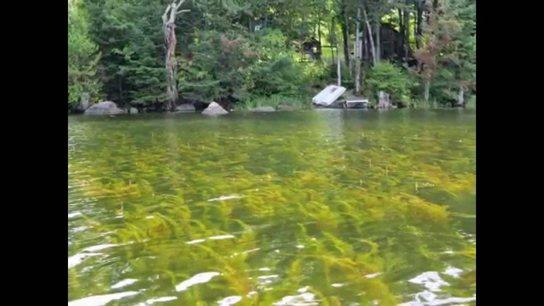L'urgence d'agir pour protéger les lacs et les cours d'eau du Québec
