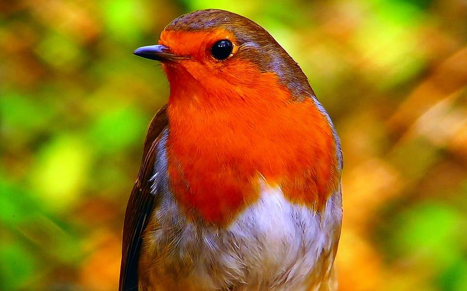 Rassembler beaucoup d'oiseaux peut faciliter la transmission de maladies