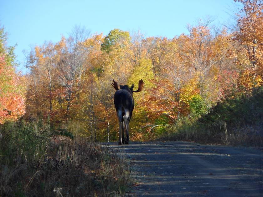 Consultation publique sur la construction d'un chemin dans le Nord-du-Québec