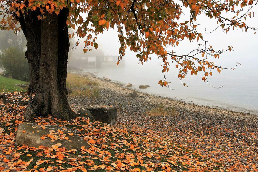 Les brûlages de feuilles mortes responsables d'incendies au cours de l'automne