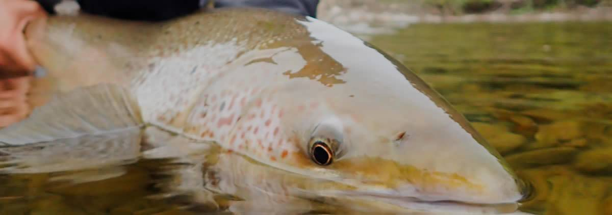 Pour en apprendre davantage sur la conservation du saumon atlantique