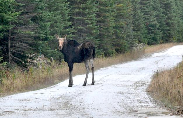 Un chasseur canadien arrêté pour être entré illégalement aux États Unis