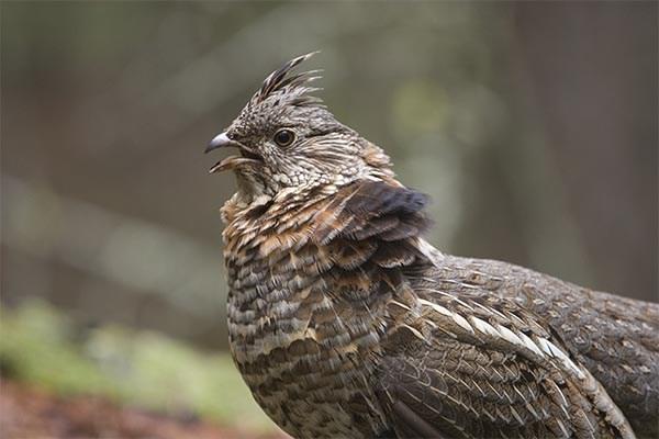 Savoir distinguer «permis de chasse» et «droit de chasse» dans une zec