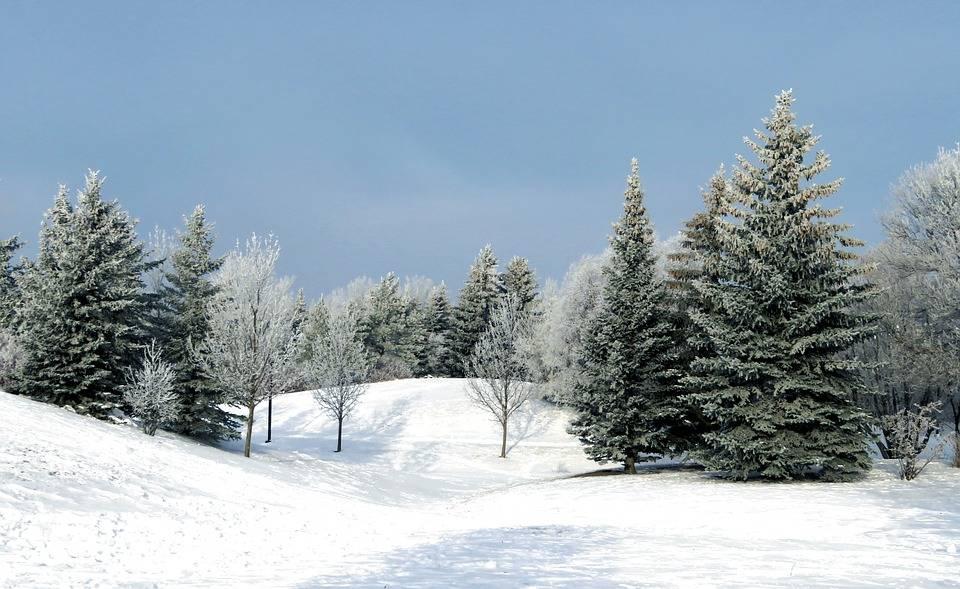 Saviez-vous qu'il est interdit de couper un arbre situé dans la forêt publique?