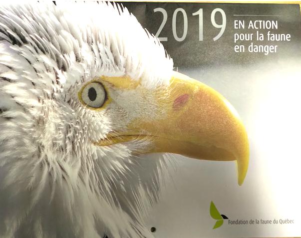 38 espèces animales jugées menacées ou vulnérables au Québec en 18 ans !