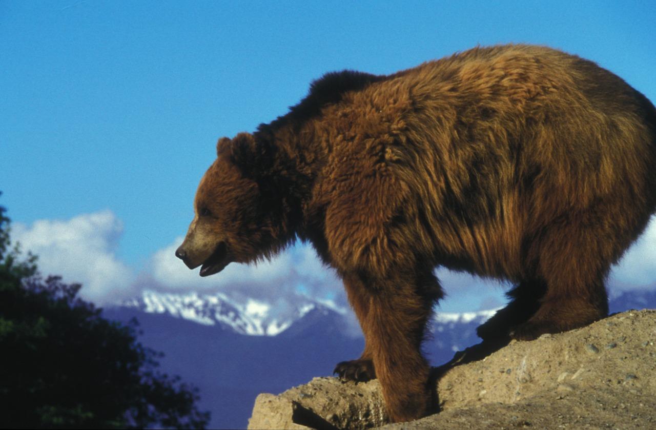 Un ours grizzly tue une femme et son bébé de 10 mois au Yukon
