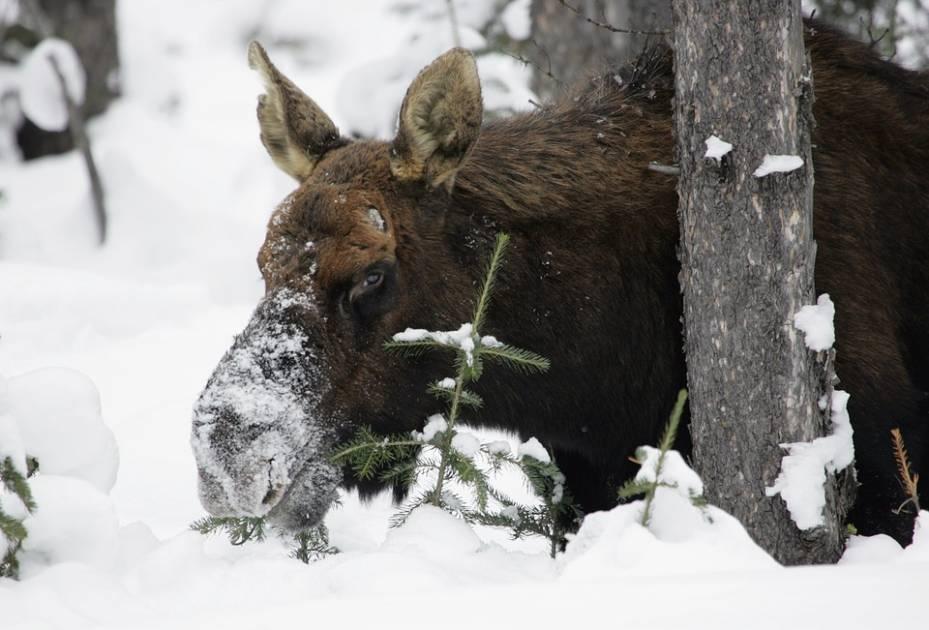 Fermeture d'un chemin forestier au Saguenay-Lac-Saint-Jean