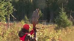 Un guide de chasse est confronté à un orignal