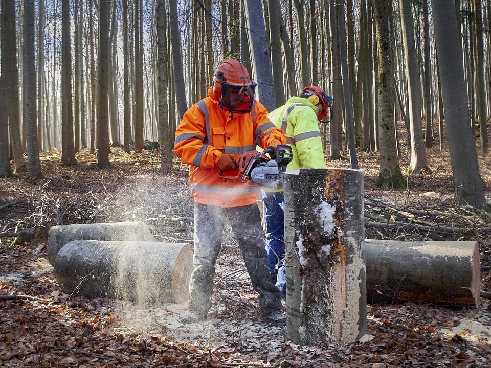 Les bouleversements sont nombreux pour l'industrie forestière canadienne