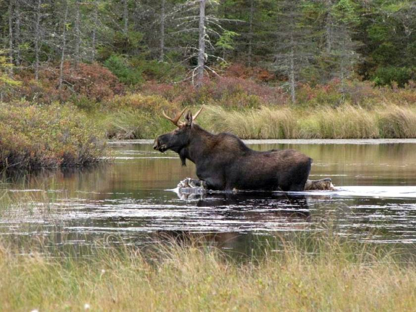 Après la pêche, l'Ontario freine l'augmentation des prix des permis de chasse