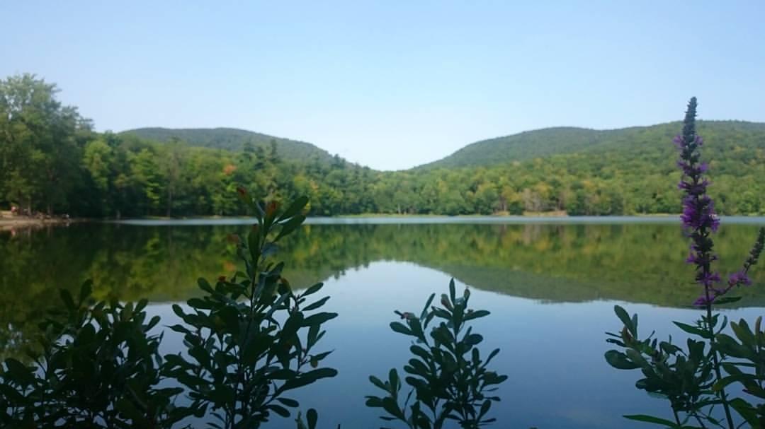 Des espèces végétales ont disparu du Mont St Hilaire au cours des décennies