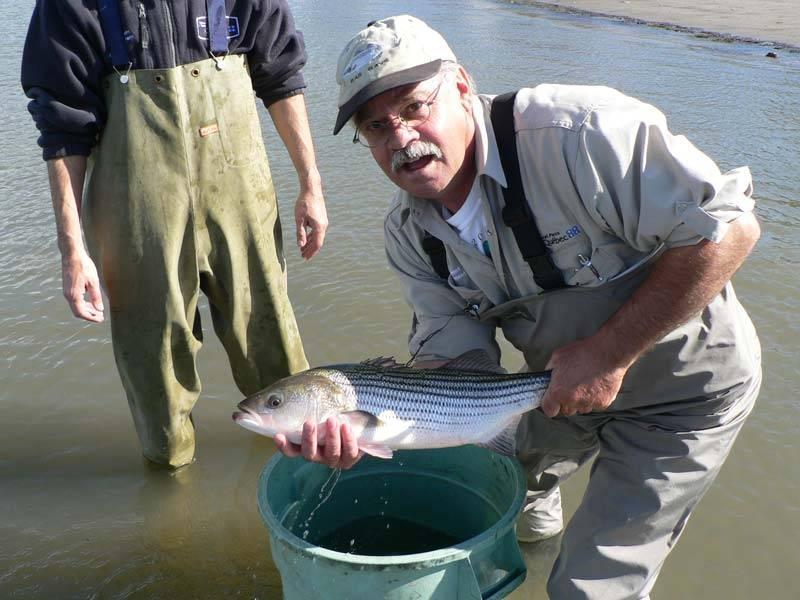Ouverture de la pêche au bar rayé dans certaines rivières au Québec