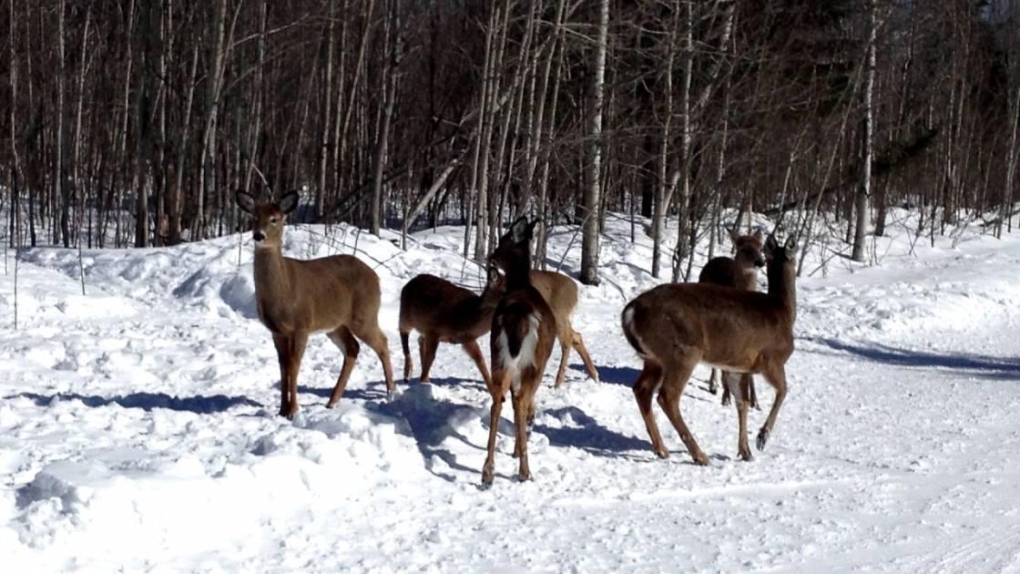 En Gaspésie, la zone de chasse 1 est subdivisée en deux sous zones