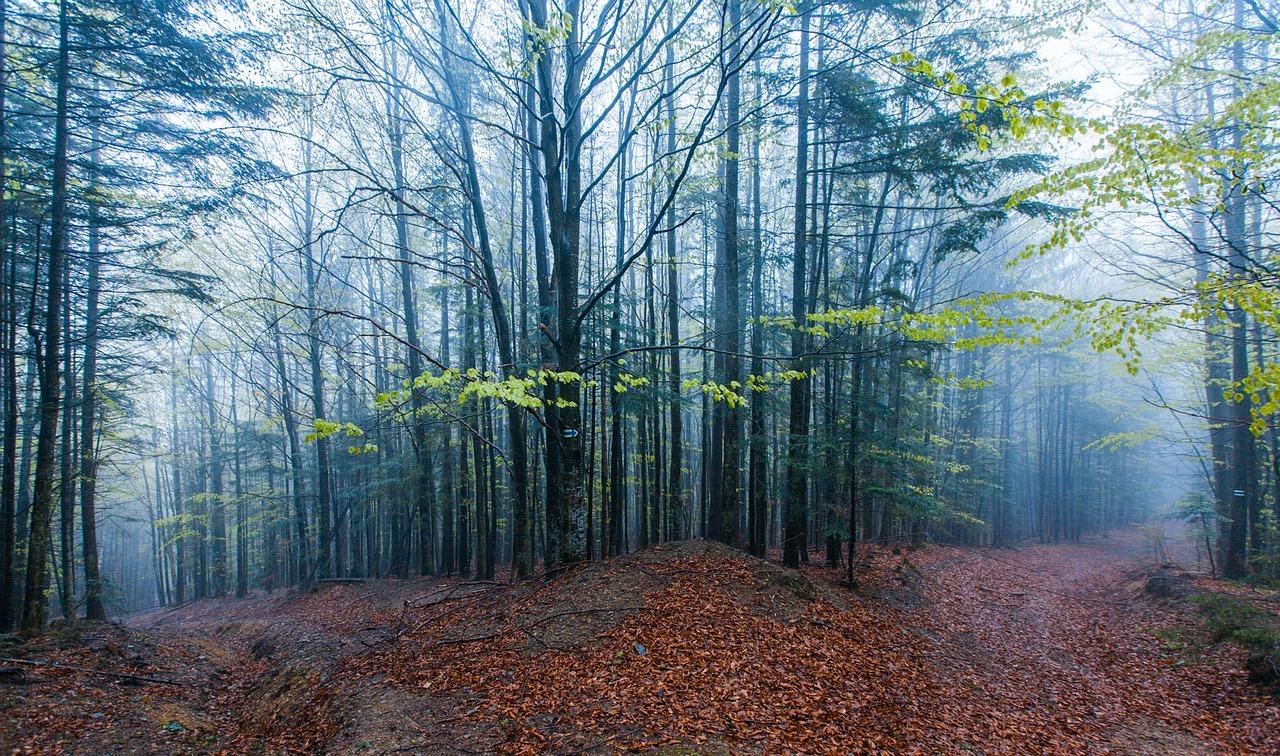 Feux de forêt: un mois d'avril exceptionnellement calme