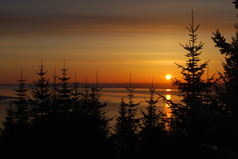 Mois de l'arbre et des forêts, célébrons nos forêts en mai