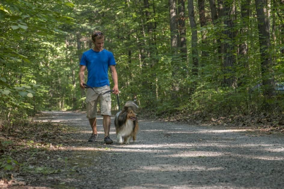 Les chiens sont maintenant admis dans tous les parcs nationaux du Québec