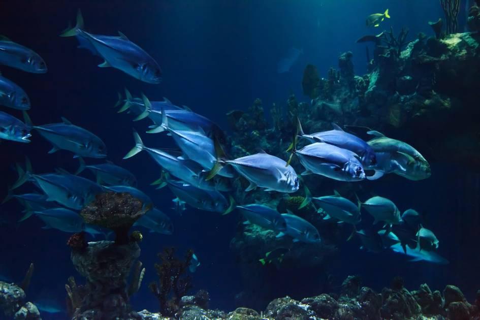 Le réchauffement pourrait réduire la vie marine de 17 pour cent