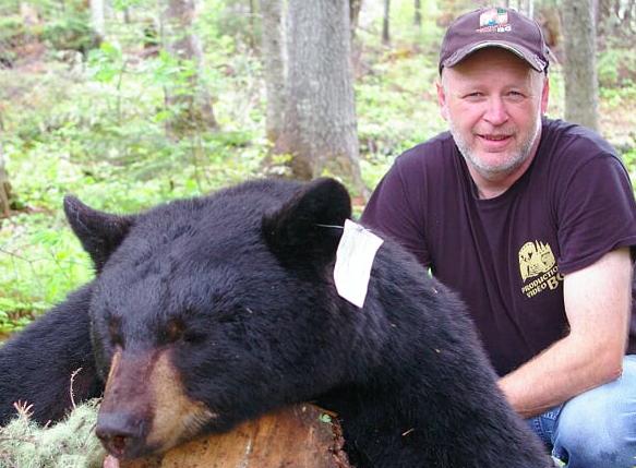 L'ours noir vagabonde pour se nourrir en prévision de… l'hiver