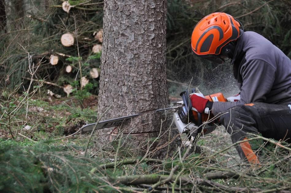 28,5 M$ investis pour la réalisation de travaux sylvicoles en forêt privée