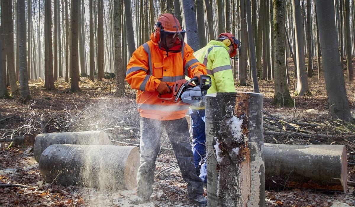 Douze initiatives dédiées aux habitats fauniques en forêt privée