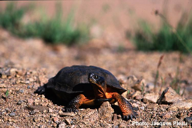 21 projets acceptés et soutenus par la Fondation de la faune