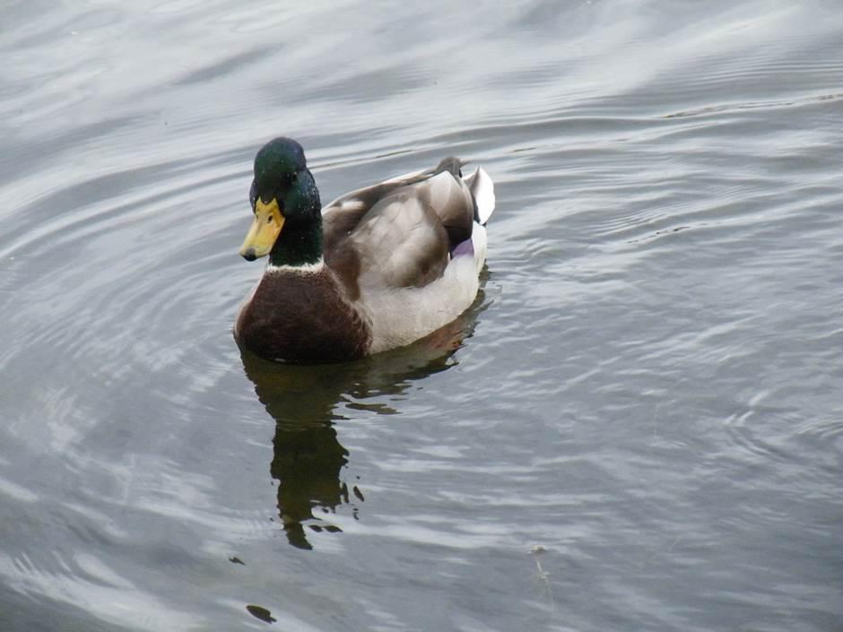 La FédéCP critique les modifications du Règlement sur les oiseaux migrateurs