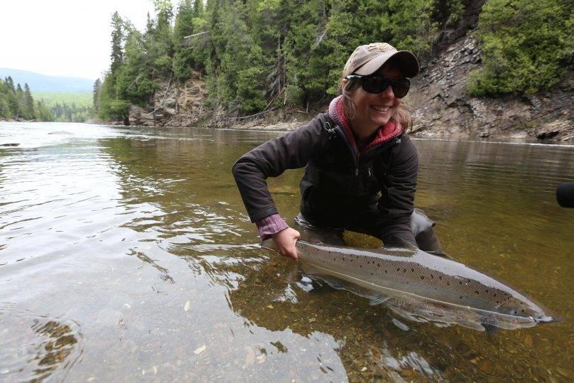 Les pêcheurs pourront conserver les grands saumons dès le 1er août