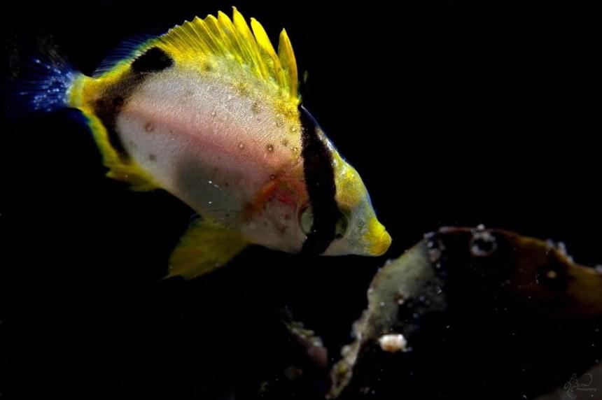 Des poissons tropicaux observés dans les eaux de la Nouvelle-Écosse