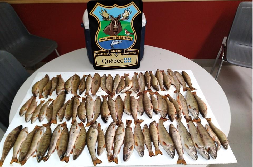 Des pêcheurs d'ombles de fontaine sanctionnés par Québec