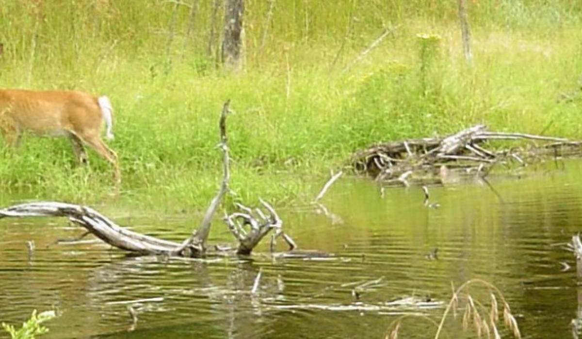 Une aide financière de 85 000 $ destinée aux milieux humides