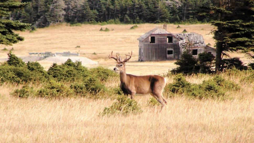 Une saison de chasse qui promet à Anticosti