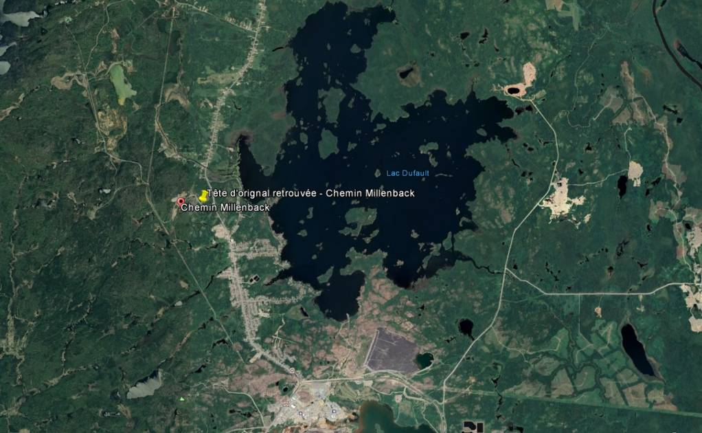 Mort suspecte d'un orignal à Rouyn-Noranda