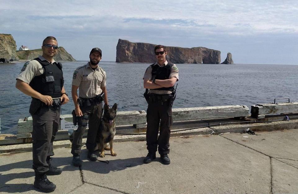 Des individus interpellés en lien avec la pêche au bar rayé en Gaspésie