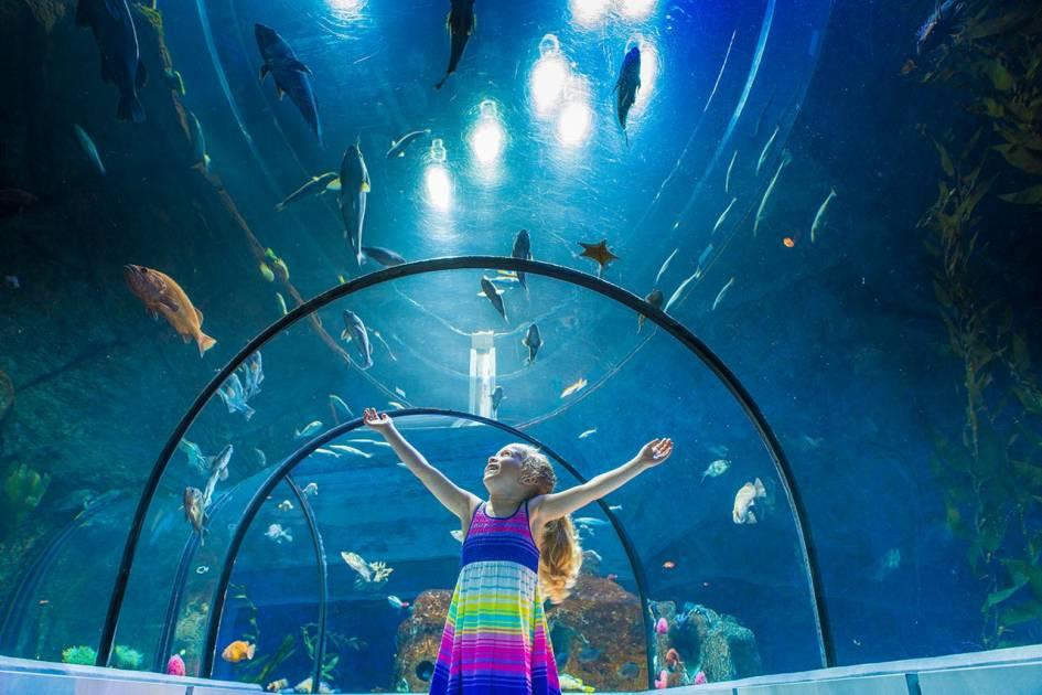 Fermeture possible de l'Aquarium du Québec en raison de la grève