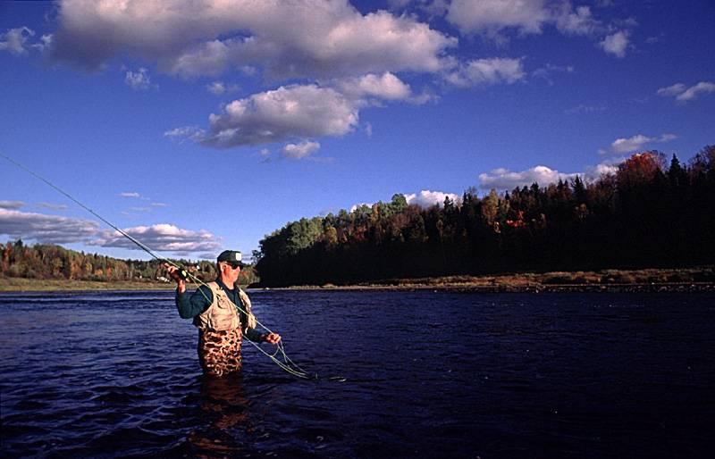 Des organismes veulent éradiquer l'achigan à petite bouche pour sauver le saumon
