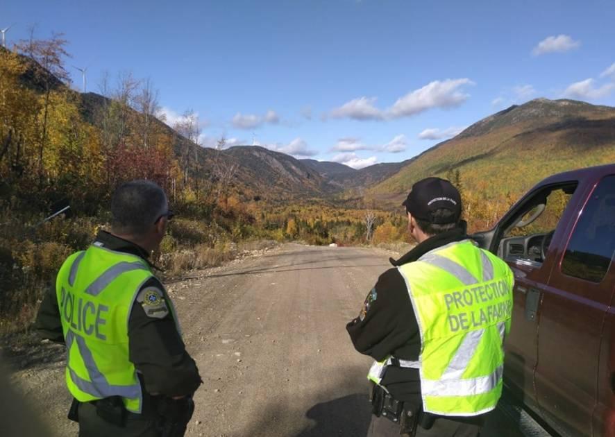 Mort suspecte d'un orignal femelle en Outaouais